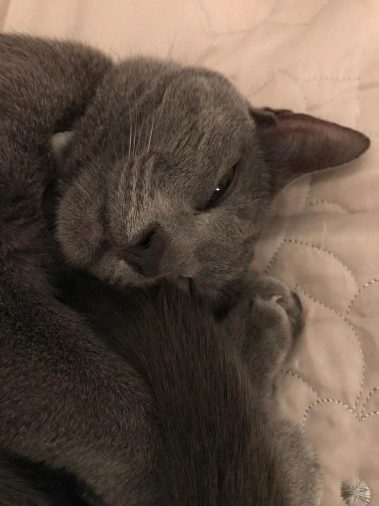 眠りonベッド3